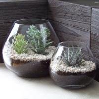 socculent-terrarium